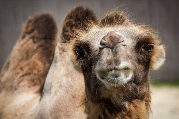 Aardvark Marketing Consultants | Have you got a marketing camel?