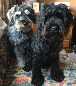 Aardvark Marketing Consultants | Health and wellbeing team Ted and Murphy